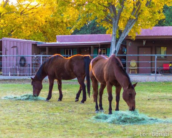 horses at Tubac